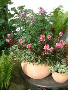 Blühende Alleskönner für Haus und Garten