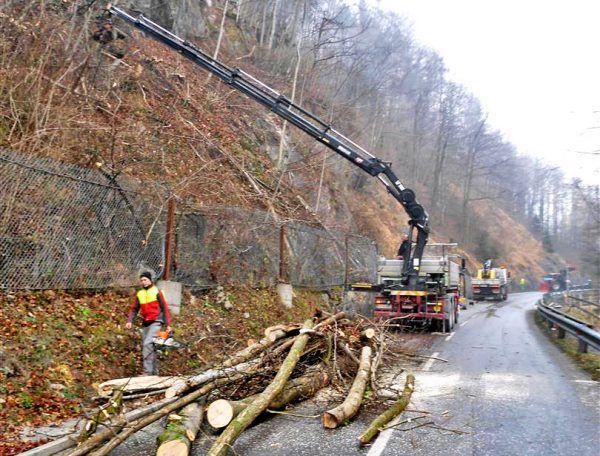 Umfassende Forstarbeiten werden durchgeführt. Stadt Hohenems
