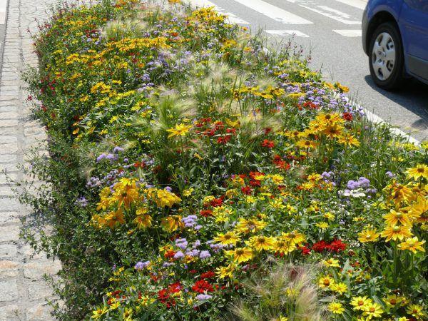 Blumenwiesen helfen den Bienen und anderen Tieren.Rammel