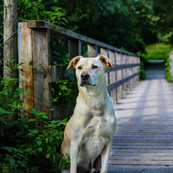 Katana ist anfangs zurückhaltend (o.).Bei Cookie ist Hundeerfahrung nötig (l.).Tierschutzheim (3)