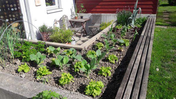 Mit einem Hochbeet kann platzsparend angepflanzt werden.Rammel