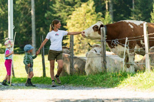 Auf Wanderwegen bleiben und die Zäune beachten gehört zu den wichtigen Verhaltensregeln im Umgang mit Weidevieh. Stiplovsek