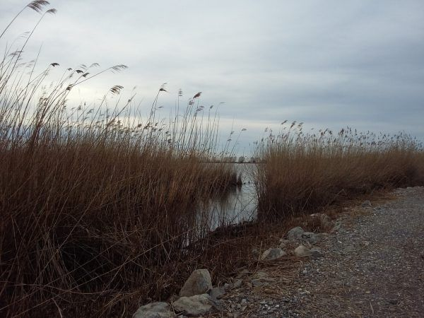 In der Fußacher Bucht wurde Ende Mai eine Leiche gefuden.NEUE Archiv