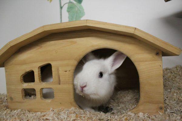 Werden ein paar Regeln beachtet, können Kaninchen den Sommer genießen.Tierschutzheim (3)
