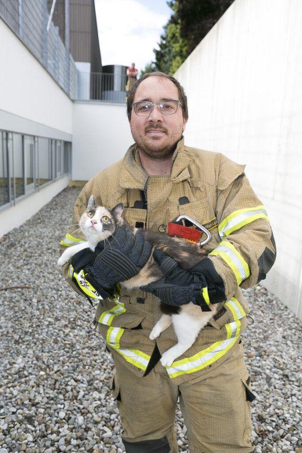 Die Katze wurde gerettet.© Mathis