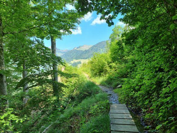 Idyllischer naturnaher Weg nach Plazera (großes Bild). Oben: Lasanggabrücke, rechts: Lasanggabach–Marulbach.Hertha Glück
