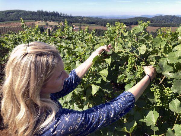 Winzerin Christine Clair inspiziert die Trauben in ihrem Weingut.AP (2), AFP