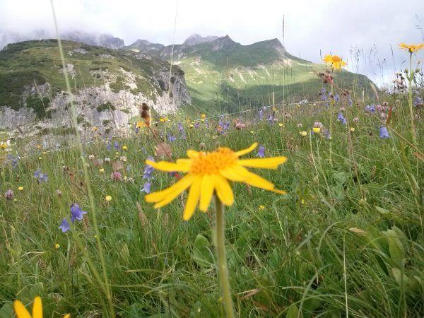 Auch Flora und Fauna in den Alpen sind besonders schützenswert. NEUE