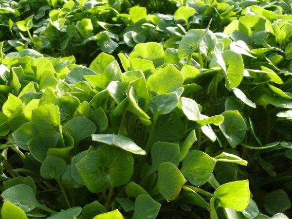 Auch im Herbst können die Beete noch grün sein.Rammel, Haringer