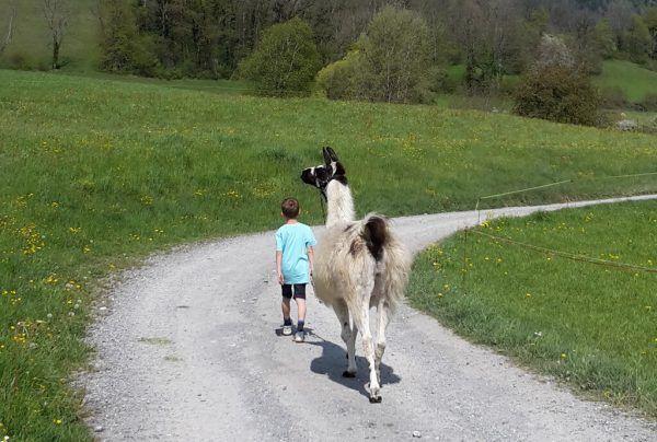 Beim Ferienangebot für Kinder aus suchtbelasteten Familien sind auch vier Alpakas und ein Lama beteiligt. knecht-Burghart/Stiftung Maria EBene