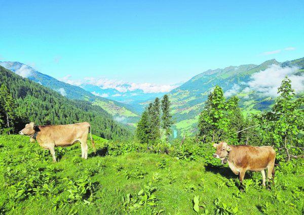Die Alpweide der Alpe Steris (großes Bild). Eine Sennereibesichtigung (oben) lohnt sich.Hertha Glück
