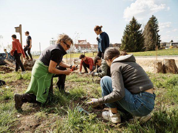 Auf der von der i+R zur Verfügung gestellten Freifläche im Seedomizil Lochau graben, jäten und pflanzen Schüler der MS Lochau.Handout/i+R