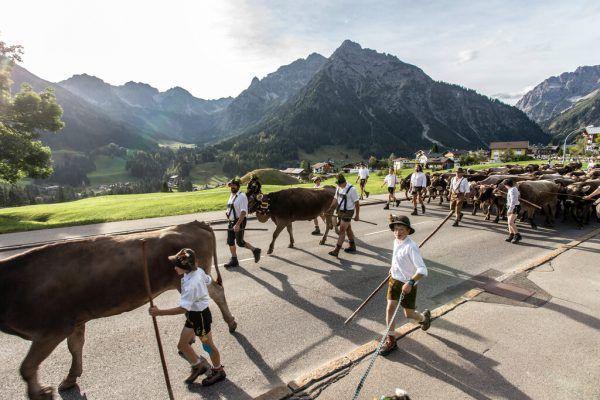 Der Alpauf- und abtrieb ist eine jahrhundertealte Tradition.Kleinwalsertal Tourismus