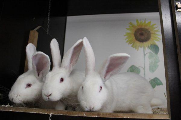 Die drei Hasen brauchen Freilauf.