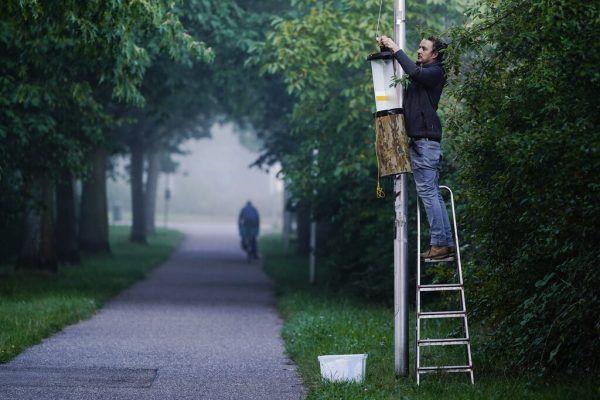 Mit insektenfreundlicher Beleuchtung soll Abhilfe geschaffen werden.DPA