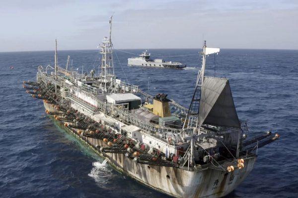 Die Umweltschutzorganisation Sea Shepherd (kleines Foto) beobachtet die chinesischen Schiffe genau.ap, Sea Shepherd/Isaac Haslam/Ap